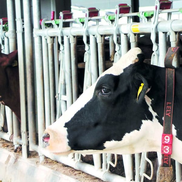 Jourdain Safety-Lock COW Panels in use.