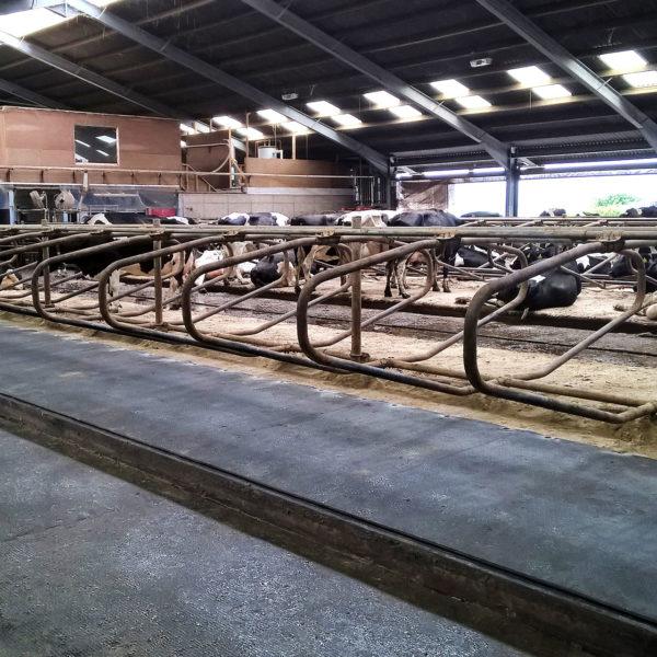 Kraiburg WELA LongLine rubber stall mats in use.