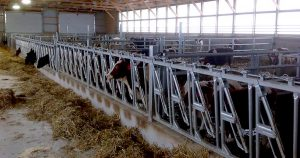 Lienke's Calf Barn.