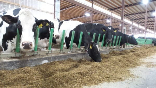 Agromatic FreeFEED System
