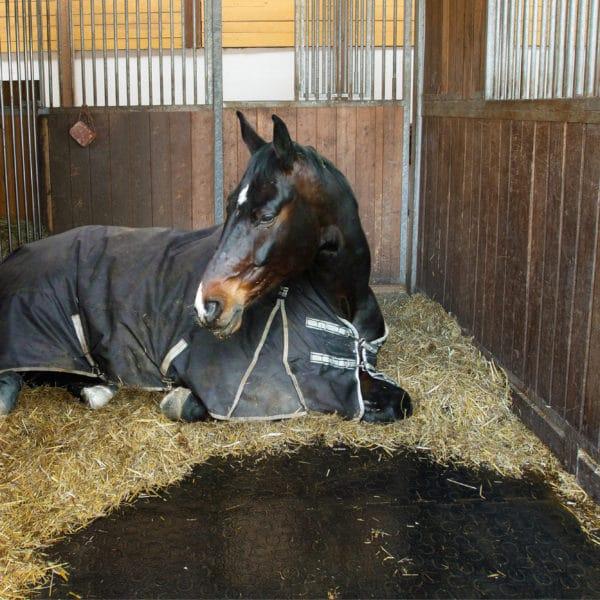 Horse Laying on BELMONDO Horse Mats