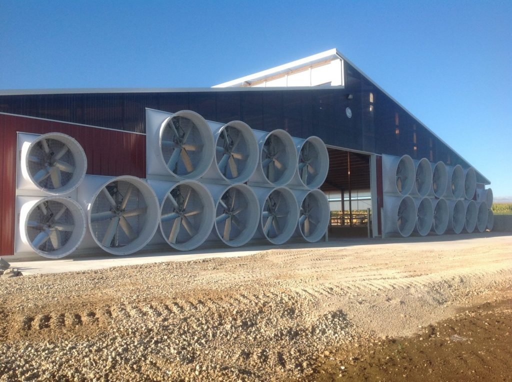 Tunnel ventilation on a dairy farm with exhaust fans.