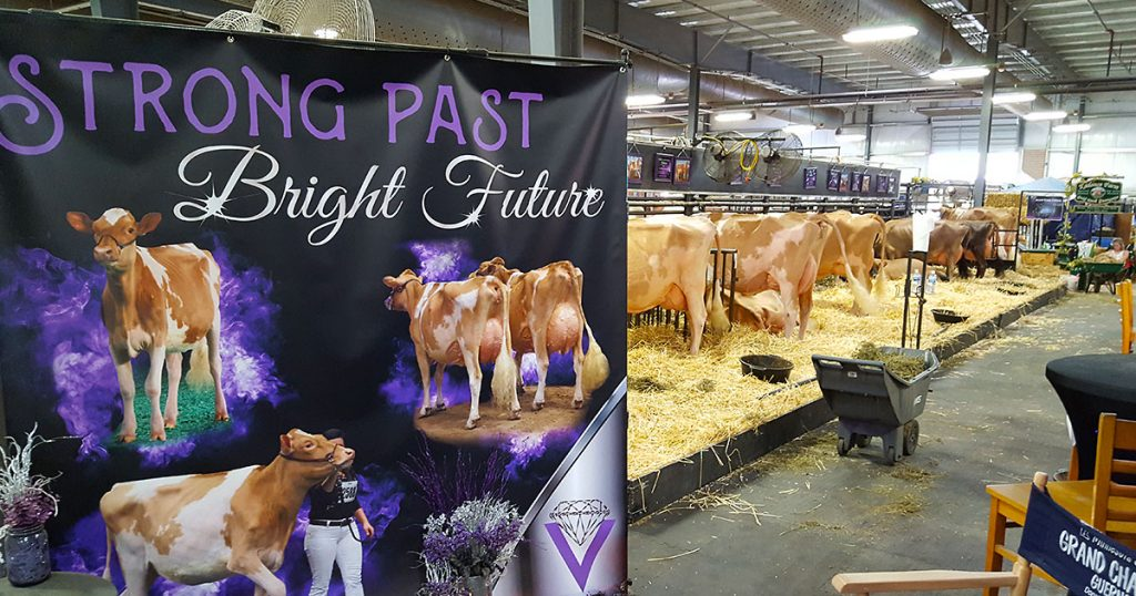 Strong Past, Bright Future banner in cow pavilion.