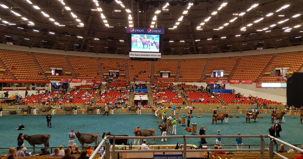 World Dairy Expo 2017 Cattle Show.