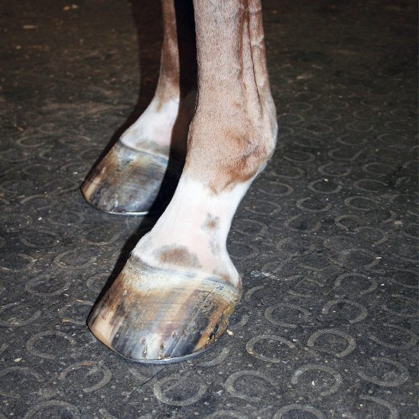 Horse standing on BELMONDO Walkway Rubber Mat